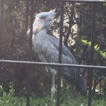 千葉市動物公園のここがすごい!/GWお出かけオススメ情報