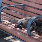 猫好き必見!グラバー園に続くグラバースカイロードの猫パラダイス